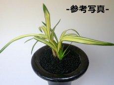 画像2: 黒土(化粧砂) 中粒・小粒セット (2)