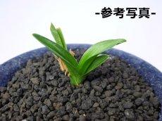 画像3: 黒土(化粧砂) 中粒・小粒セット (3)