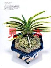 画像2: にっぽんの伝統園芸vol.4(別冊趣味の山野草)/栃の葉書房  (2)