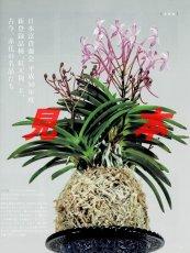 画像3: にっぽんの伝統園芸vol.5(別冊趣味の山野草)/栃の葉書房  (3)