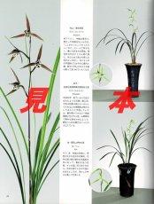 画像5: にっぽんの伝統園芸vol.5(別冊趣味の山野草)/栃の葉書房  (5)