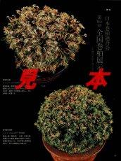 画像6: にっぽんの伝統園芸vol.5(別冊趣味の山野草)/栃の葉書房  (6)