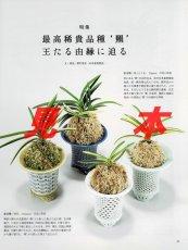 画像2: にっぽんの伝統園芸vol.5(別冊趣味の山野草)/栃の葉書房  (2)