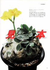 画像7: にっぽんの伝統園芸vol.5(別冊趣味の山野草)/栃の葉書房  (7)