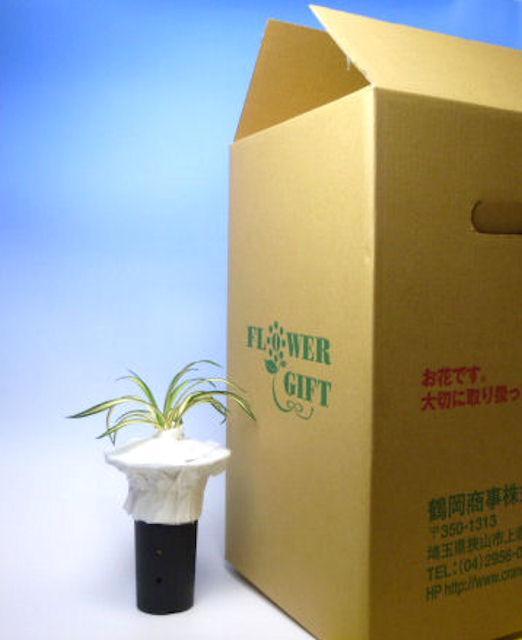 画像1: 鉢植え発送 (1)